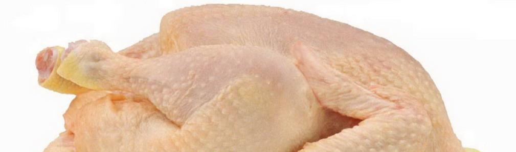 carn de pollastre